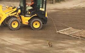 整備の邪魔をする猫に、作業員「どけー!」 しかし、それでも効果がないと