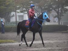 オジュウチョウサン&シンキングダンサー、東京HJ厩舎情報/美浦トレセンニュース