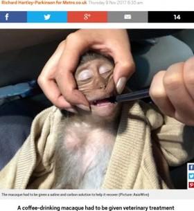 旅行者のコーヒーを盗み飲みした猿、カフェイン過剰摂取で意識不明に(タイ)
