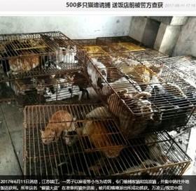 毎年恒例「玉林犬肉祭り」への批判に沸く中国 江蘇省ではネコ500匹が保護
