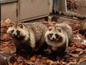 比べてみると面白い、旭山動物園の在来種と外来種
