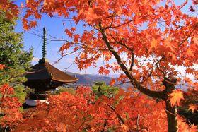 秋こそ古都が美しい。秋の京都を観光しよう!おすすめ7選☆