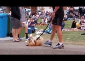 「まだ帰りたくないんだ!」公園で死んだふりをする犬(豪)