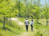 独身シニアの4割「パートナーが欲しい」 東日本大震災以降、婚活を始める人が大幅増加